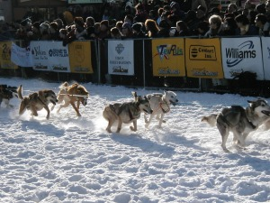sled-dogs-1042199_1280
